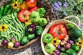 Cô giáo trẻ xinh đẹp yêu làm vườn, thích nấu ăn và giấc mơ được trồng rau quả sạch suốt cuộc đời