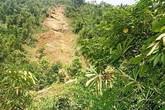 Vụ 4 người đi bóc quế bị đất đá vùi lấp ở Yên Bái: Hoàn cảnh bi đát của các nạn nhân