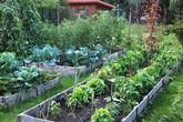 Khu vườn 100 năm vẫn xanh tươi, ngập tràn rau trái nhờ có sự vun đắp của nhiều thế hệ