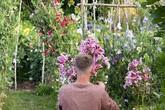 Khu vườn rực rỡ của cặp vợ chồng tự trồng hoa cho đám cưới