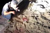 Hưng Yên: Bé trai 7 tuổi bị gần chục con chó dữ tấn công