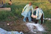 Xuất hiện ổ dịch tả lợn châu Phi đầu tiên tại Hà Tĩnh