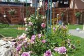 Khu vườn 600m² đẹp bình yên với hơn 100 gốc hồng của mẹ Việt