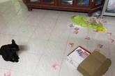 Bật cười cảnh vợ hý hửng tìm được quỹ đen của chồng nhờ mèo yêu