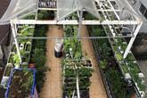 Ông bố Sài Gòn bỏ chi phí 30 triệu để nuôi cá, trồng rau đủ loại trên sân thượng 45m²