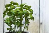 10 loại cây trồng hoàn hảo dành cho những ai lần đầu muốn làm vườn trong nhà
