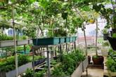 Sân thượng 50m² trồng đủ loại rau sạch và hoa hồng của bà mẹ Hà Nội