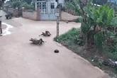 Nam thanh niên nằm sấp, co giật giữa đường sau cú va chạm giữa ngã tư