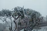 Miền Bắc rét dưới 7 độ, có thể xuất hiện băng giá ngày cuối dịp nghỉ Tết