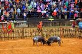 Tạm dừng lễ hội chọi trâu Phù Ninh - Phú Thọ để phòng, chống dịch Corona