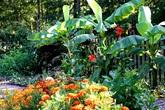 Khu vườn xanh tươi ngập tràn rau quả sạch của nữ giám đốc yêu thích việc trồng cây