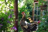 Người phụ nữ quyết bỏ nghề may theo đuổi suốt nhiều năm để xây dựng một cuộc sống mới với khu vườn đẹp như cổ tích