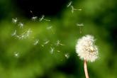 Thâm cung bí sử (205 - 4): Ông tiên về trời