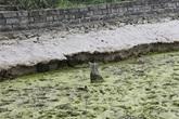 Hải Phòng khai quật bãi cọc Đầm Thượng, xã Lại Xuân, huyện Thủy Nguyên