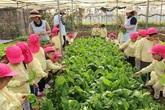 Ngôi trường đặc biệt có trang trại nuôi lợn, gà, vườn rau sạch trên nóc nhà