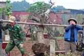 Dân làng Nhật Tân tất bật ươm lại đào cho vụ mới