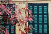 Vẻ đẹp thơ mộng trên những khung cửa sổ chỉ có ở mùa cây thay lá