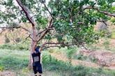 Nông trại rộng lớn khó sao Việt nào địch nổi của NTK Đỗ Mạnh Cường