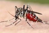 Muỗi chết cả đàn với một vốc đường trắng