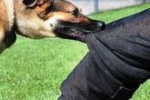 Nghệ An: Thầy giáo tử vong vì bị chó dại cắn