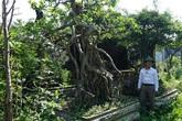 Khu vườn bỏ hoang toàn 'siêu cây' bạc tỷ của đại gia nức tiếng một thời