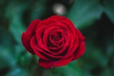 Lời chúc ý nghĩa dành tặng mẹ nhân Ngày của Mẹ