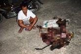 Bị bắt vì trộm bò hàng xóm xẻ thịt đem bán