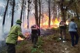 Nắng nóng gay gắt, cháy rừng ở Hà Tĩnh bùng phát trở lại