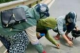 Hành động đẹp của nhóm học sinh nhặt đinh rơi vãi trên đường giữa nắng 40 độ C