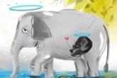 Dân mạng phẫn nộ vì voi mẹ mang thai chết khi ăn dứa nhồi thuốc nổ