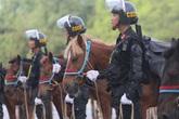 Giống ngựa của Đoàn CSCĐ kỵ binh diễu hành trước Quảng trường Ba Đình có đặc điểm gì nổi bật?