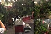 Hà Nội: Cành cây gãy trúng quán cà phê khiến nhiều người chạy tán loạn