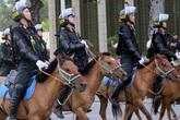 Có thể sử dụng thêm giống ngựa Bắc Hà để xây dựng Đoàn Cảnh sát cơ động kỵ binh