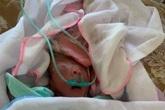 Hải Phòng: Phát hiện bé sơ sinh bị bỏ rơi ở cổng chùa Thiên Tộ