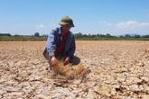"""Thanh Hóa: Cận cảnh hình ảnh nứt nẻ của những đồng lúa """"giãy chết"""" trong đại hạn"""