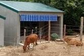 Nghệ An: 67 chuồng bò với giá hơn 12 tỷ đồng khiến dư luận băn khoăn