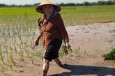 Cảm phục cụ bà gần 90 tuổi ra đồng thấy khỏe hơn ở nhà