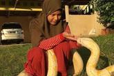 Cô bé nuôi 6 con trăn khổng lồ làm thú cưng