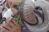 Nạn nhân nhập viện mang theo con rắn hổ mang
