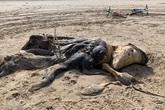 """Bí ẩn xác """"quái vật"""" dài 4,5m dạt vào bờ, dân mạng tranh luận kịch liệt về danh tính sinh vật vì mãi vẫn không nhìn ra nó là gì"""