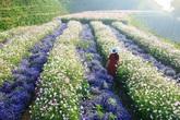 Thâm cung bí sử (219 - 8): Hơn cả các loài hoa