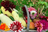 Người phụ nữ thích tự làm phân bón để trồng cả vườn rau tươi tốt