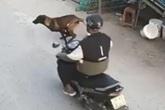 Xe máy tông trúng chó chạy băng qua đường, 2 người bị thương nặng