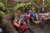 Dân mạng trầm trồ trước quán cafe có cây mít sai trĩu, hàng chục quả to như nồi cơm treo đầy cành, xếp đầy gốc