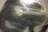Quảng Ninh: Phát hiện rắn hổ mang chúa trong hành lý của hành khách đi xe ô tô