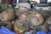 Quảng Ninh: Chặn đứng vụ vận chuyển 41 cá thể tê tê qua biên giới
