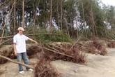 Thanh Hóa: Bão số 6 cuốn trôi 1,2ha rừng phòng hộ