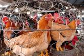 Phòng virus cúm A/H7N9 bằng cách nào?