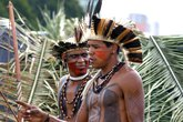 Khám phá thuốc bí truyền được người Dominica tôn sùng như Viagra