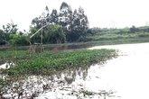 Đóng bè chuối kéo quan tài trên sông ở Hà Nội